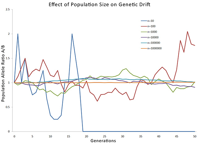 is migration an example of genetic drift