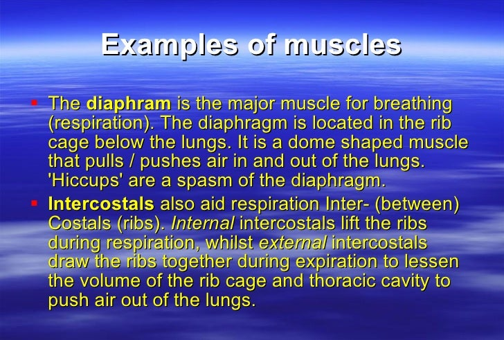 exocytosis example in the human body
