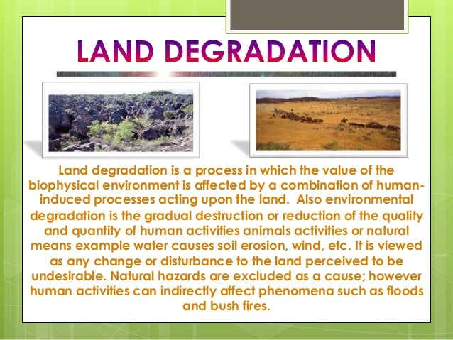 example of animals indirectly affected by deforestation