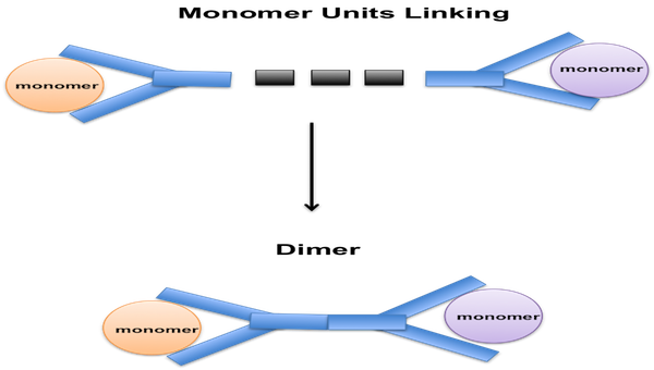 dimer domain definition with example