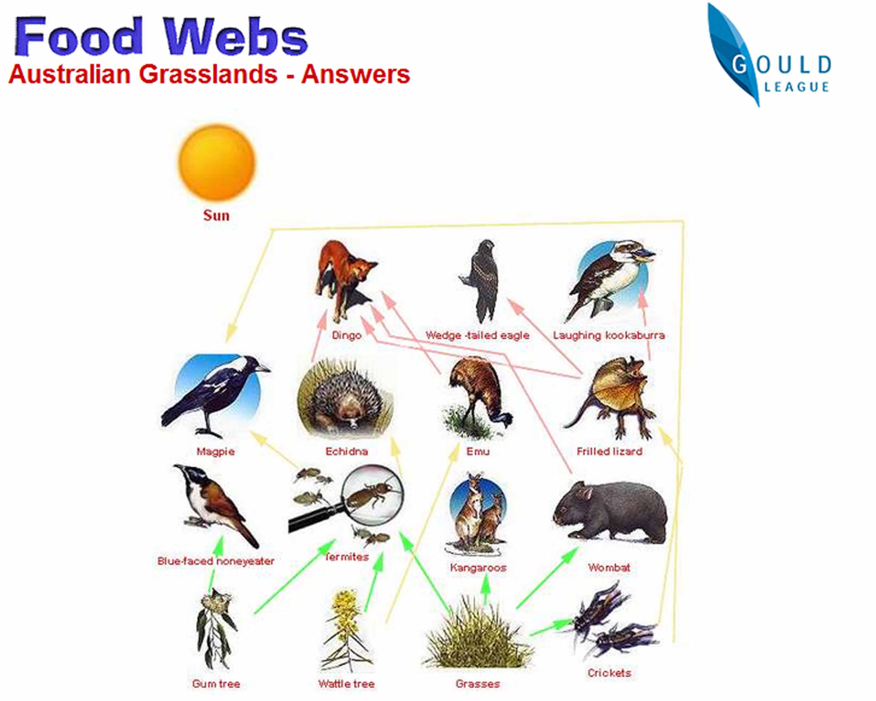 what is a decomposer provide an example